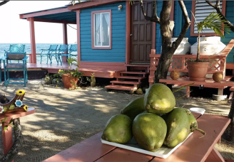 airbnb scout life bird island 2